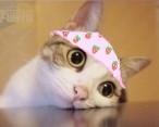07 3 94 Meow star people emoji gifs