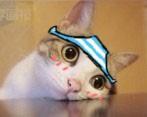 115 1 94 Meow star people emoji gifs