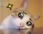 94 Meow star people emoji gifs