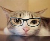 16 4 94 Meow star people emoji gifs