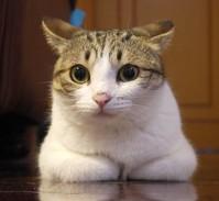 31 2 94 Meow star people emoji gifs
