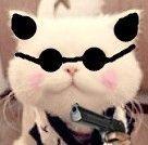 33 Fat cats, cute cats emoji free download